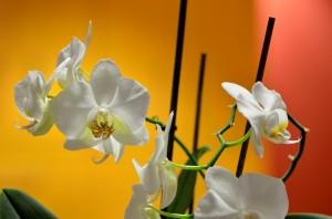 FT Blumen Still 02